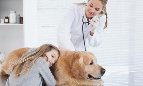 Exames Regulares -  Clínica Veterinária em Curitiba